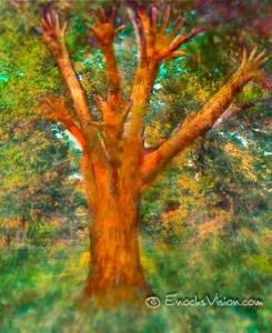 tree10968479_10152682243063951_1511570741295508277_n